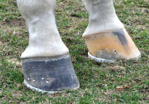 Course Desc pic2 hooves